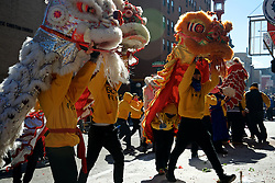 Lion dancers at the Feb. 14, 2016 Lunar New Year celebration in Chinatown, Philadelphia. Here two dancers operate a single lion, while dragon dancers are operated by much larger teams.
