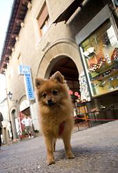 A dog in San Marino, on October 13, 2009, in San Marino,  San Marino.  (Photo by Vid Ponikvar / Sportida)