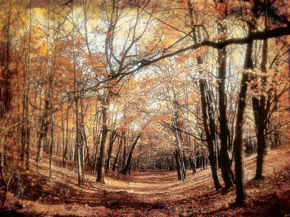 Autumn in High Park, Toronto (Canada). iPhone 4 capture.