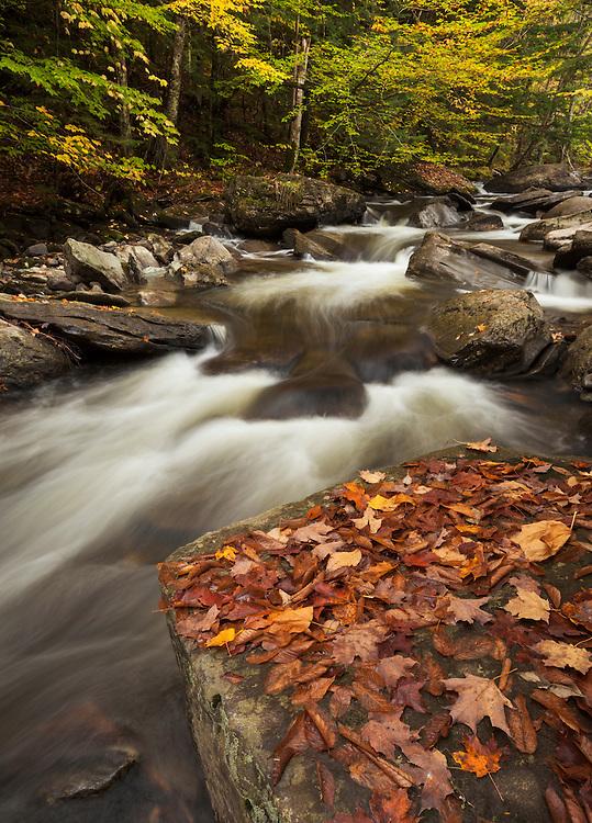 autumn foliage along E. Branch Missisquoi River in Hazen's Notch, Vermont