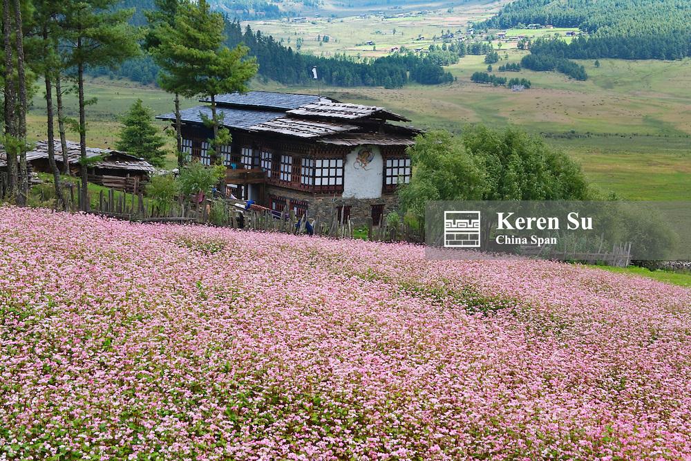 Village house with buckwheat farmlands, Phobjikha Valley, Bhutan