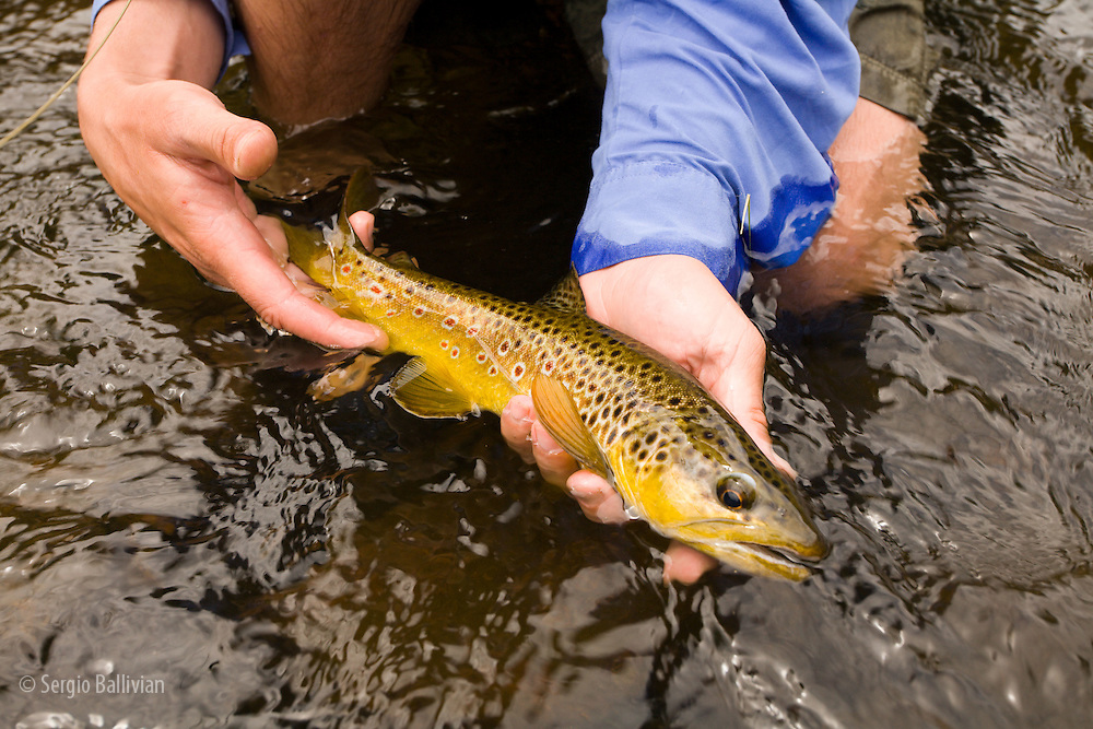 A man enjoying flyfishing during summer on the Big Thompson River near estes Park Colorado.