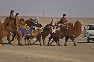 Mongolia. camel festival. Gobi desert.. in Winter for Tsagan sar , the mongol new year  Bulgan -