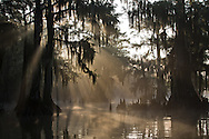 Early morning light cuts through fog on  Lake Fausse Lake Fausse rapps around  bald cypress trees in Lake Fausse Pointe State Park.