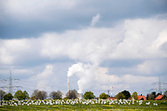 26/04/17 - ROSENTHAL - BASSE SAXE - ALLEMAGNE - Reportage COLZA. Station de Recherche de Rosenthal - Photo Jerome CHABANNE