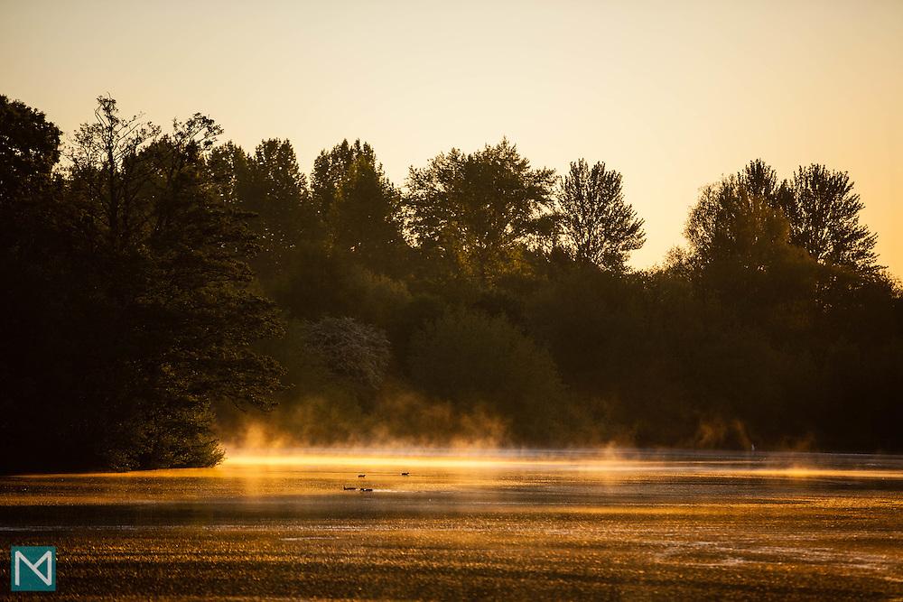 Mist on the lake at Rickmansworth Aquadrome