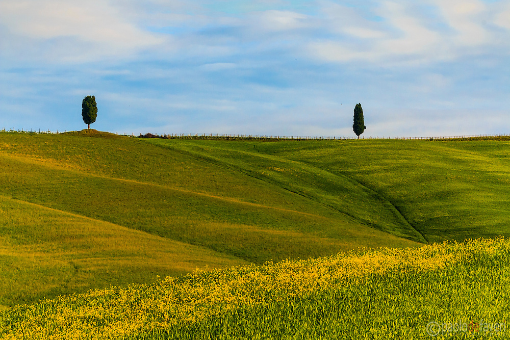 Two cypress trees on the top of a hill nearby San Quirico d'Orcia in Orcia Valley, Tuscany. Taken on a early, sunny morning at the end of April