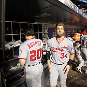 NEW YORK, NEW YORK - July 08: Bryce Harper #34 of the Washington Nationals and Daniel Murphy #20 of the Washington Nationals in the dugout preparing to bat during the Washington Nationals Vs New York Mets regular season MLB game at Citi Field on July 08, 2016 in New York City. (Photo by Tim Clayton/Corbis via Getty Images)