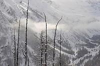 24.11.2008.Alpine landscape with European Larch (Larix decidua)..Gran Paradiso National Park, Italy