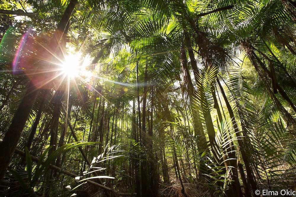 Forest around Sawre Muybu, an indigenous community at Tapajos River, Para, Brasil. Sawre Muybu, a Munduruku indigenous community on the Tapajos River, Para, Brazil.