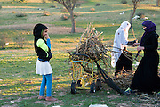Beduin women collecting firewood. Photographed in Israel, Negev Desert