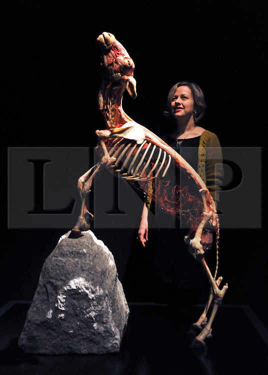 © Licensed to London News Pictures. 03/04/2012. London, UK A woman looks at a plastinated mountain goat. The launch of The Natural History Museum's Animal Inside Out exhibition. The exhibition is the UK premiere from the team behind Gunther von Hagens' Body Worlds shows, with almost 100 specimens on show. Animal Inside Out runs from April 6 April to September 16 at the Natural History Museum, London. Photo credit : Stephen SImpson/LNP