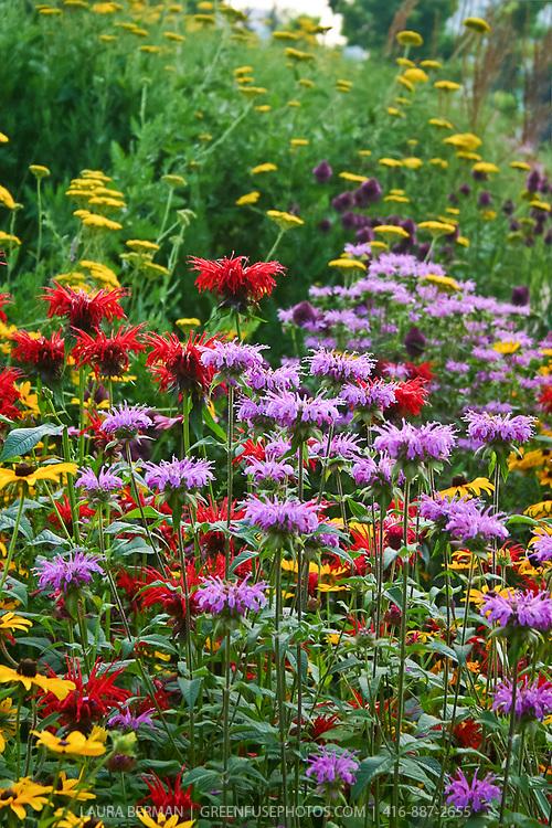 Red and pale purple Beebalm (Monarda didyma)  yellow Yarrow (Achillea), dark purple Drumstick allium, and yellow Rudbeckia, all perennials attractive to bees and other pollinators.