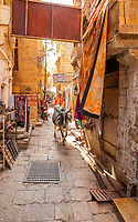 A cow walking down a narrow street in Jaisalmer Fort, Jaisalmer, Rajasthan, India.