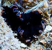 Guam, Night Dive, Macro Creatures, Micronesia