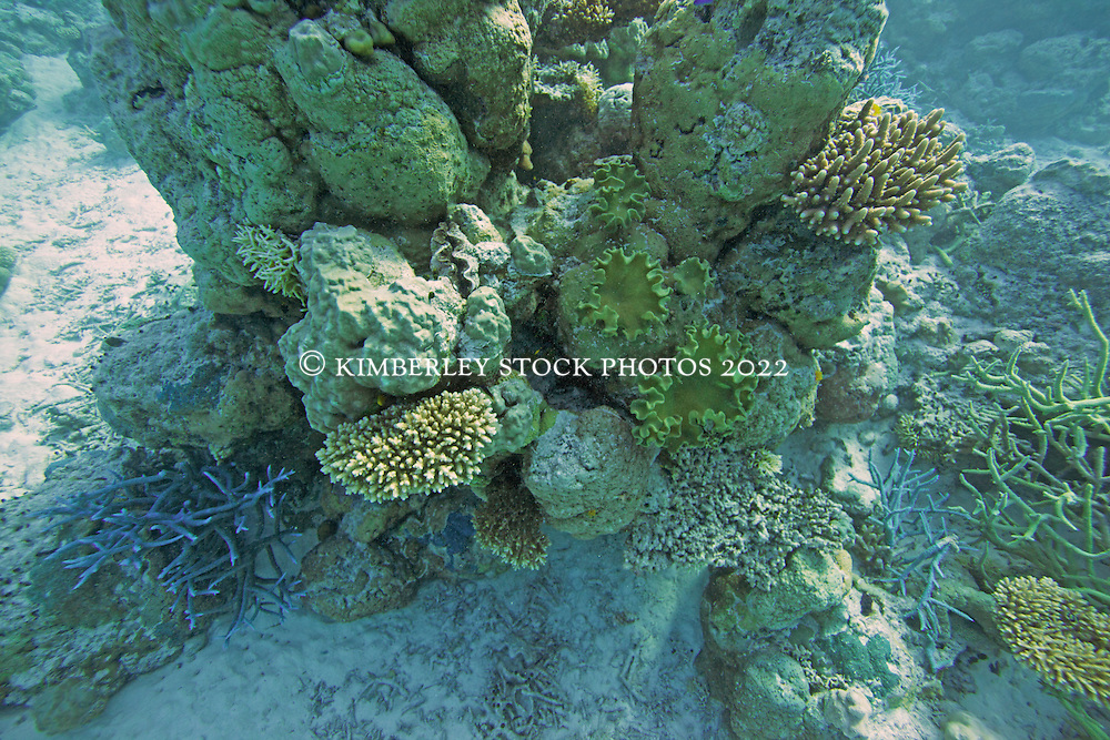 Various corals in the Clerke Channel at the Rowley Shoals.
