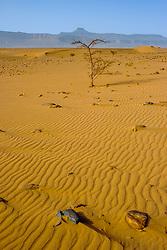 Ripples in the sand in the Moroccan desert near Foum Zguid in the south of Morocco<br /> <br /> (c) Andrew Wilson   Edinburgh Elite media