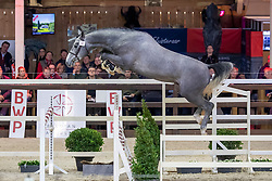 018, Relax vd Bisschop<br /> BWP Hengstenkeuring -  Lier 2020<br /> © Hippo Foto - Dirk Caremans<br />  18/01/2020
