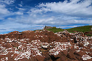 A dramatic panoramic skyscape with billowing cumulus clouds in a deep blue sky over the ruins of Duntulm Castle from Ru Meanish, Isle of Skye. In the foregound on the shore are hexagonally jointed Basalt dykes of a strikingly red colour.<br />
