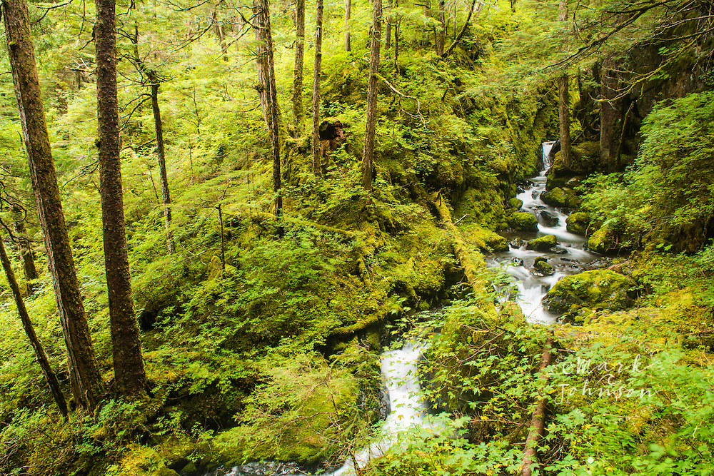 Stream in the lush temperate rain forest of Tongass National Forest, Sitka, Alaska