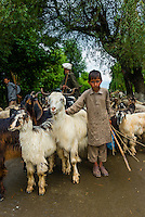 A boy and his family herd goats and sheep along a road near Srinagar, Kashmir, Jammu and Kashmir State, India.