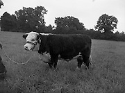 21/08/1959<br />