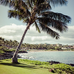 Maui Hawaii palm tree photo with Wailea Beach and the Pacific Ocean. Copyright ⓒ 2019 Paul Velgos with All Rights Reserved.