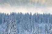 Suiza, Winter 2012 / Invierno 2012