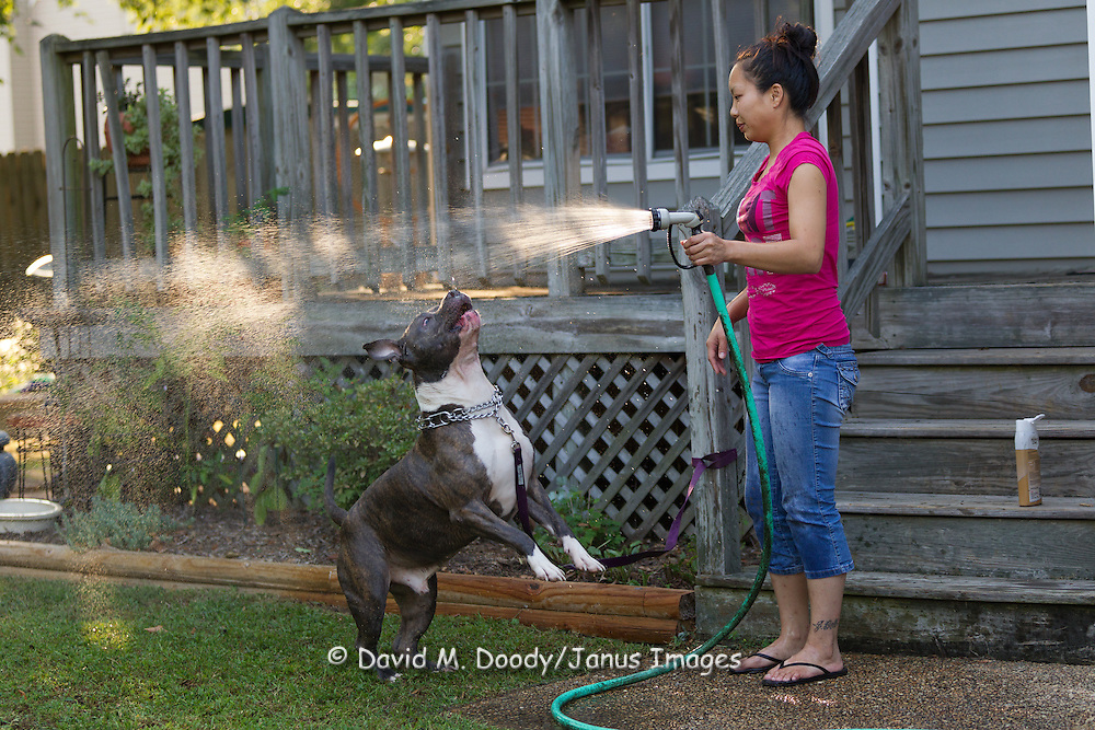 Kimberly washing her Pit Bull KK, playing with the water.