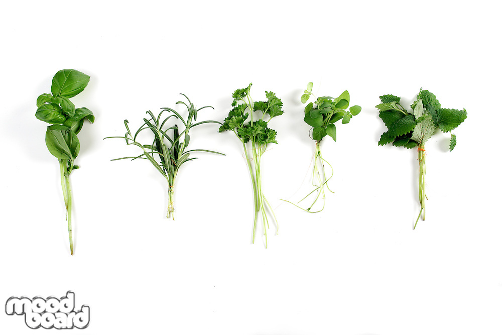Studio shot of fresh herbs