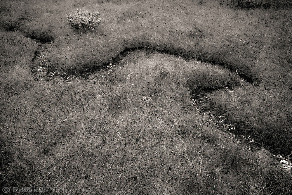 meadow grasses along a dried meandering streambed in the Indian Heaven Wilderness -Gifford Pinchot National Forest, Cascade Mountain Range, Washington state, USA monochrome