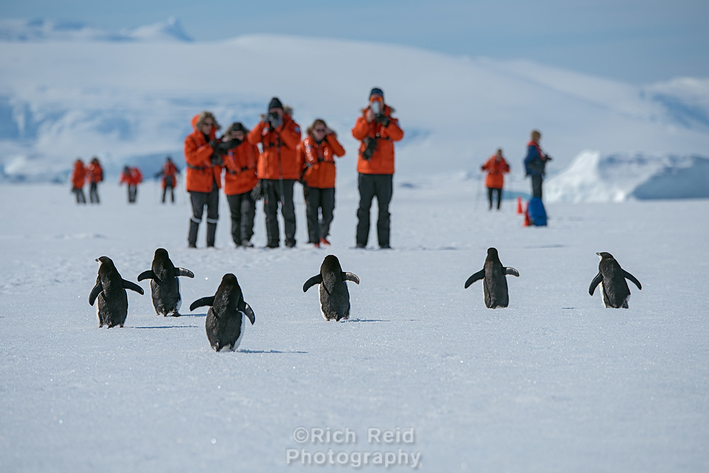 Adelie penguins and guests on the fast ice in Hanusse Bay in Antarctica.