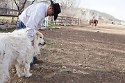 CREDIT: Steven St. John for The Wall Street Journal<br /> &quot;ANIMAS<br /> <br /> Brian Dils tends to the animals on his family land in Aztec New Mexico on Tuesday March 23, 2016. Dils and his family depend on water from the Animas River and they are concerned the lack of EPA testing will expose them to harmful levels of lead as more toxic sediment gets stirred up in the spring runoff.