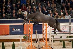 256 - J D Angelo de Landetta<br /> KWPN Hengstenkeuring 2017<br /> © Dirk Caremans<br /> 01/02/2017