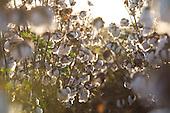Algodao | Cotton