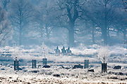 © Licensed to London News Pictures. 20/01/2015. Richmond, UK. People ride horse through the park.  Deer graze in frost covered grasses in Richmond Park, Surrey today 20th January 2015. Britain is experiencing very cold temperatures. Photo credit : Stephen Simpson/LNP