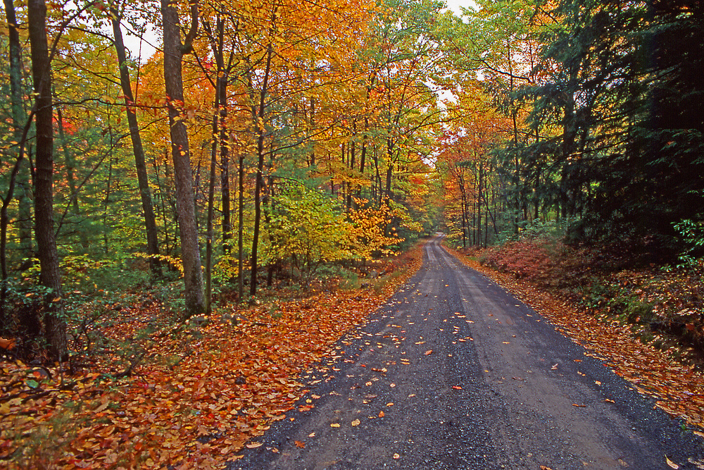 Road into forest, Snyder-Middleswarth State Forest, PA