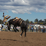 Grant Lane, 16, from the Scone region flips head over heals off his mount during the Novice Saddle Bronc riding at the Branxton Rodeo at Branxton, Hunter Valley,  New South Wales, Australia, on Saturday 17th October 2009.  Photo Tim Clayton.