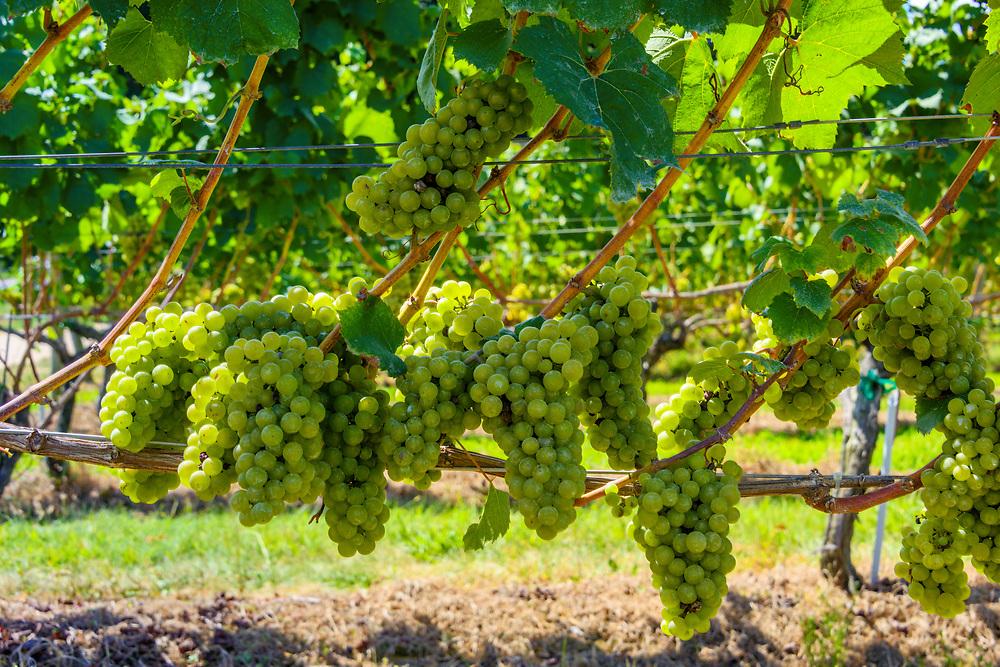 Vineyard Vines In Long Island Ny
