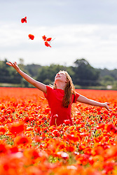 © Licensed to London News Pictures. 03/07/2016. York UK. 10 year old Cerys stands in a field of poppies near York in this morning's bright sunshine. (parental consent has been given) Photo credit: Andrew McCaren/LNP