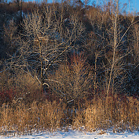 Late afternoon light on bare winter trees. Bluffers Park, Toronto