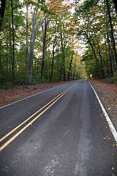 Small paved open road with many trees in the autumn