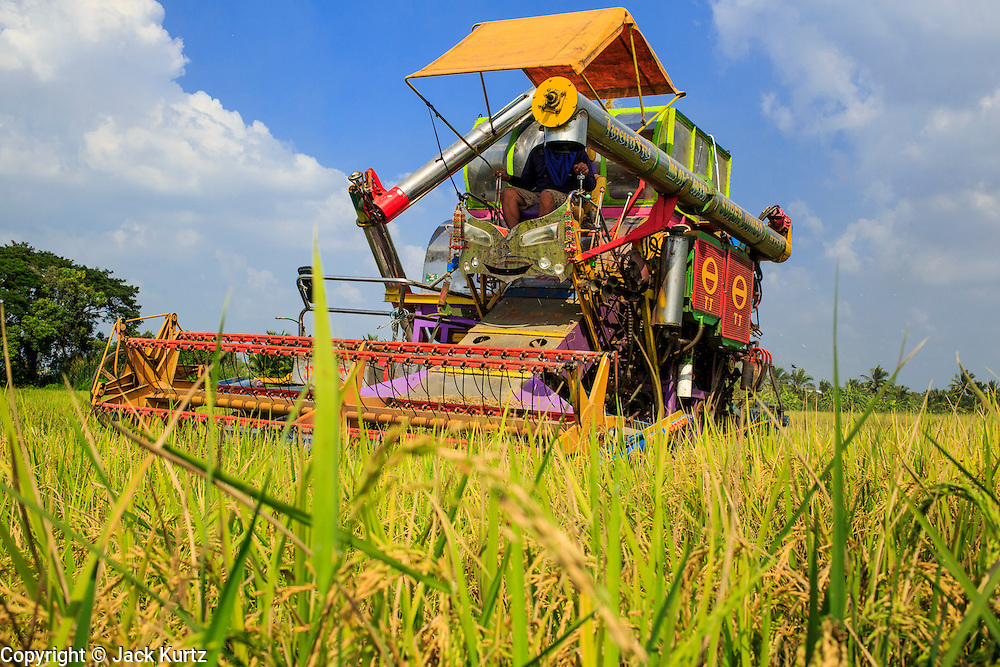 "15 NOVEMBER 2012 - PATHUM THANI, PATHUM THANI, THAILAND:  Workers harvest rice in a paddy near Pathum Thani. The Thai government under Prime Minister Yingluck Shinawatra has launched an expansive price support ""scheme"" for rice farmers. The government is buying rice from farmers and warehousing it until world rice prices increase. Rice farmers, the backbone of rural Thailand, like the plan, but exporters do not because they are afraid Thailand is losing its position as the world's #1 rice exporter to Vietnam, which has significantly improved the quality and quantity of its rice. India is also exporting more and more of its rice. The stockpiling of rice is also leading to a shortage of suitable warehouse space. The Prime Minister and her government face a censure debate and possible no confidence vote later this month that could end the scheme or bring down the government.   PHOTO BY JACK KURTZ"