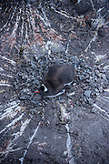 Gentoo penguin sitting on nest with eggs. Port Lockroy, Antarctic Treaty Historic Site No. 61, British Base A. Home to a small Gentoo penguin colony. Antarctica.
