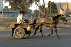 Iraqi Civilians on a horse drawn cart travel through the Basra City as the Iraqi commuter morning rush hour begins passing British Troops who are carrying out an IED sweep in the area. March 2005
