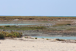Flocks of terns roost on the Lacepede Ilslands to the northwest of Broome on the Kimberley coast.