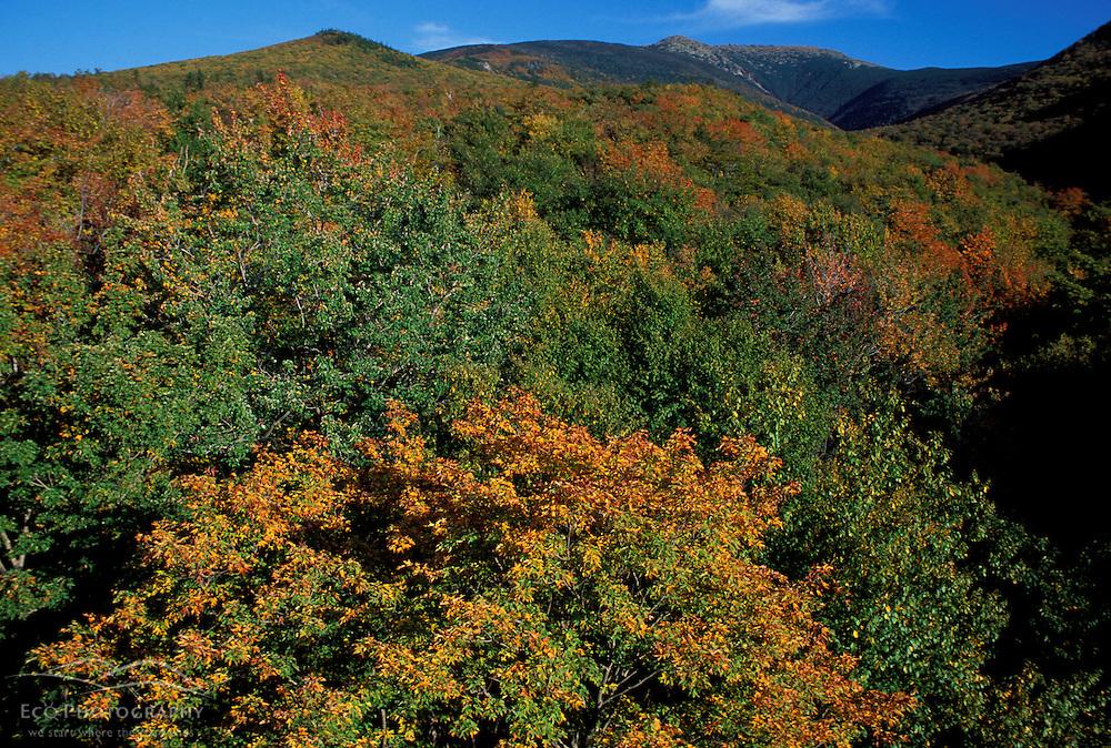 Lafayette Brook Scenic Area.  Mt. Lafayette. Fall foliage.  Near Franconia Notch.  White Mountain N.F., NH