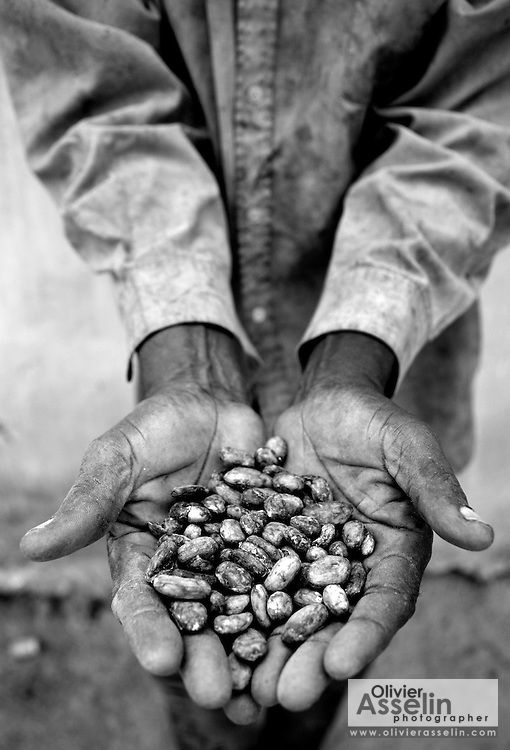 Cocoa farm, Central Region.<br />