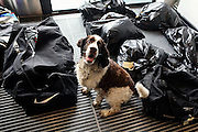 A sniffer dog has just identified a bag of a new inmate to be suspicious and is calling for attention in the luxurious Halden Fengsel, (prison) near Oslo, Norway.