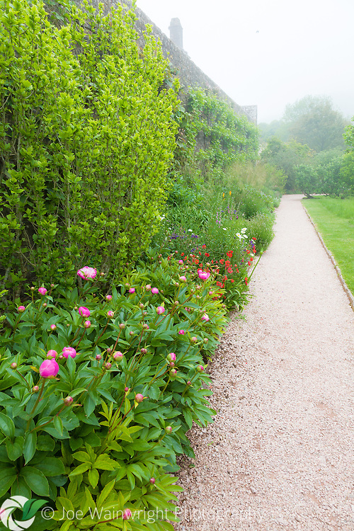 A colourful herbaceous border in the gardens at Compton Castle, Devon, photographed in June